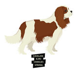 Style cavalier du Roi Charles Spaniel Geometric de collection de chien illustration stock