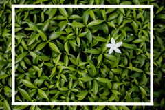 Style créatif fait de fleurs et feuilles avec des notes se trouvant à plat image libre de droits