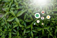 Style créatif fait de fleurs et feuilles avec des notes se trouvant à plat photo libre de droits