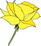 Style de bande dessinée de rose de jaune sur le fond blanc Photos libres de droits