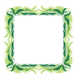 Style Fern Frame. The average frame made s, on a white background royalty free illustration