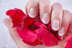Style français de vernis à ongles sur la main de femme Fille tenant les pétales de rose rouges dans le studio photographie stock libre de droits