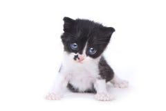 Style mignon Kitten On White Background de smoking de bébé Photos stock