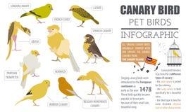 Style plat réglé d'icône de races de canari d'isolement sur le blanc Oiseaux c d'animal familier illustration libre de droits