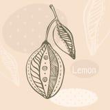Style tiré par la main de graphique de citron Illustration de Vecteur
