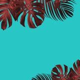 Style tropical de ton de duo de fond de feuilles d'été photo stock