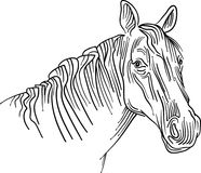 Styled brush stroke horse head abstract. Horse head styled brush stroke  drawing image with isolated white background Stock Photography