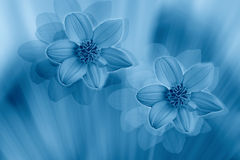 Styled flowers. Fantasy - stylized flowers in blue color, cyanotypy Stock Photos
