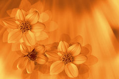 Styled flowers. Fantasy - stylized flowers in gold tone Stock Photo