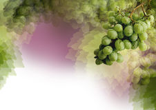 Styled grapes - background Royalty Free Stock Images