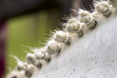 Styled Horse Mane Royalty Free Stock Photography