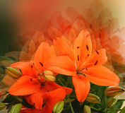 Styled lily flower. Unreal fantasy - stylized orange lilies - montage Stock Photography