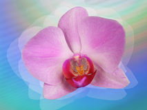 Styled orchid. Fantasy-  flower - stylized pink orchid Stock Photo