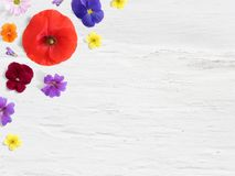 Styled stock photo. Feminine desktop floral composition with wild and edible garden flower. Poppy, pansy geranium and. Potentilla blooms, empty space and shabby royalty free stock image