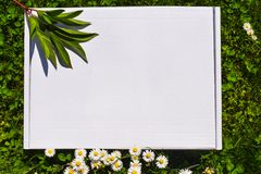 Styled stock photograpjy, mock-up digital file. Blank square for art work with green grass and white flowers background. Free royalty free stock photo