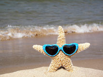 starfish with sunglasses Stock Photos