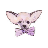 Stylised watercolor portrait chihuahua with pink bow on neck Royalty Free Stock Photos