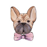 Stylised watercolor portrait french bulldog with pink bow on nec Stock Photos
