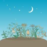 Stylisez la nuit de fleurs Image stock