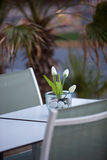 Stylish arrangement with tulips on a table for two Royalty Free Stock Photography