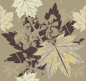Stylish autumn leaves Stock Photos
