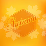 Stylish Autumn seasonal card design Royalty Free Stock Photo