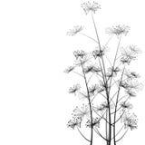 Stylish background with delicate flowers. Celebretion card stock illustration