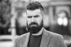 Stylish beard and mustache fall and winter season. Bearded and cool. Barber tips maintain beard. Hipster appearance. Beard fashion and barber concept. Man royalty free stock photo