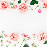 Stylish border frame made of pink roses, buds and petals on white background. Floral pattern. Flat lay, Top view. Stylish border frame made of pink roses, buds stock photo