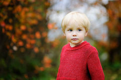 Stylish boy wearing red sweater Royalty Free Stock Photography