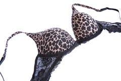 Stylish bra Royalty Free Stock Images