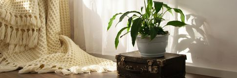 Stylish brightly part of living room with old vintage suitcase, potted plant and woolen handmade blanket on luxury wooden floor. Comfortable place for reading stock photo