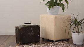 Stylish brightly part of living room with old vintage suitcase and potted plants, traditional handmade carpet on luxury wooden fl. Oor, white wall with bright stock footage