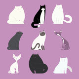 Stylish cat set with different feline bodies Royalty Free Stock Photo
