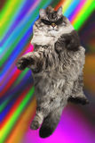 Stylish cat in sunglasses dance and jump Royalty Free Stock Photo