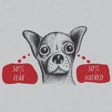 Stylish Chihuahua Poster Stock Image