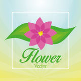 Stylish Colorful Floral Icon On Background Stock Images