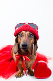 Stylish dog in red suit Stock Photography