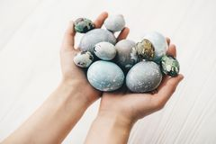 Stylish easter eggs in female hands on white wooden background. Hands holding modern easter eggs painted with natural dye in grey. And blue marble color. Happy royalty free stock images