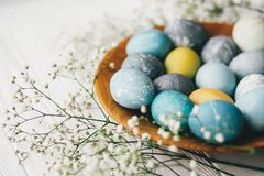 Stylish easter eggs with spring flowers on wooden plate on white wooden background. Modern easter eggs painted with natural dye in royalty free stock image