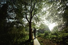 Stylish elegant groom standing with amazing bohemian bride in light in the sunny woods. Light royalty free stock image