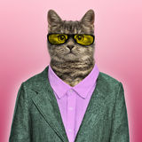 Stylish European Shorthair wearing a suit and sunglasses Stock Photos