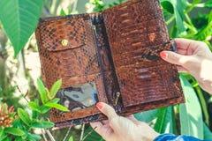 Stylish female hands holding luxury snakeskin python wallet. Fashionable women accessory. Tropical background, Bali. Stylish female hands holding luxury Stock Photos