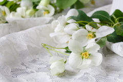 Stylish feminine space with white flowers of apple tree in vase. Styled minimalistic still life Royalty Free Stock Photography