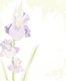 Stylish floral background. Stock Photo