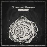 Stylish floral background, hand drawn retro rose Royalty Free Stock Photos