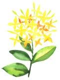 Stylish flowers illustration Stock Photography