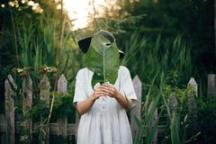 Stylish girl in linen dress holding big green leaf at face at wooden fence and grass. Portrait of boho woman in hat posing with. Leaf in summer countryside in stock photo