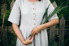 Stylish girl in linen dress holding green leaf at wooden fence and grass. Close Up of boho woman posing with cane branch in summer. Countryside in evening stock image