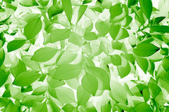 Stylish Green Leaves Texture Stock Photo